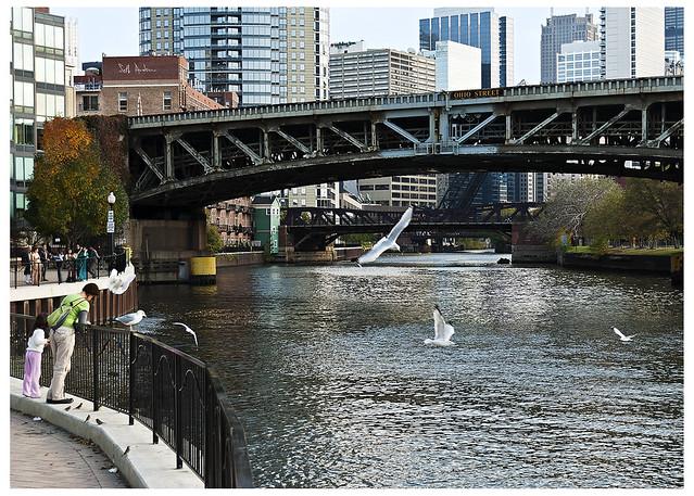 Sea Gulls under Ohio Street Bridge