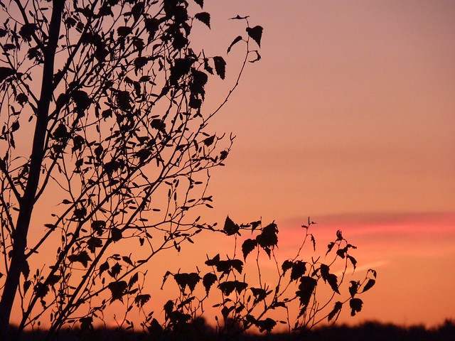 Rose du matin~~~(2)