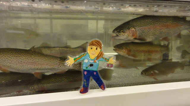 Flat Katherine and the monster rainbow trout