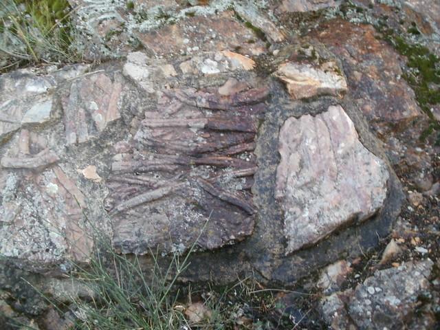 Trilobite VilluercasYokmoktree Extremadura
