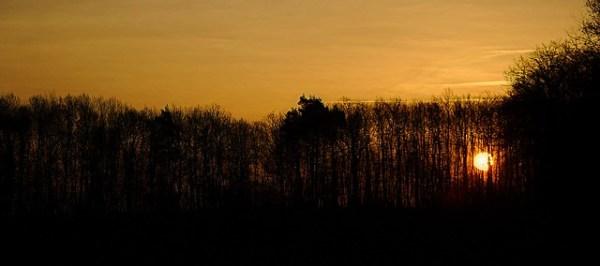 Levé de soleil dans les bois de Sennevoy le haut (Yonne)