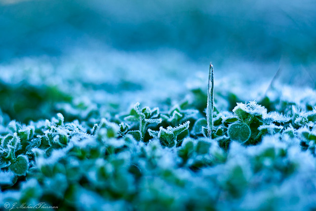 First frost covers clover