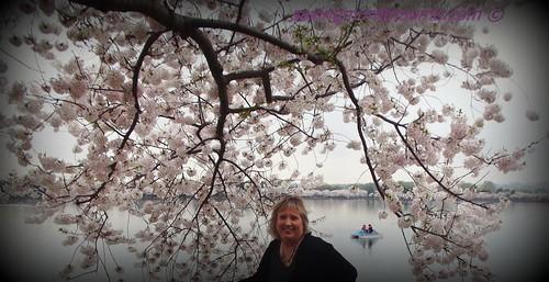 Kimberly & A Gorgeous Cherry Blossom Tree