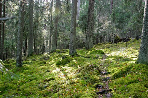 Mushroom forest in south-western Finland