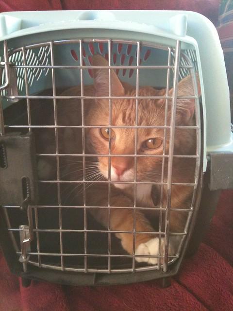 Milo in jail
