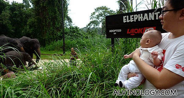 Showing Asher his first sight of real life elephants