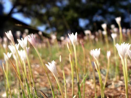 Warm Meadow by Jason A. Samfield