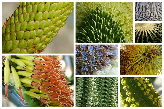 Pflanzenstrukturen