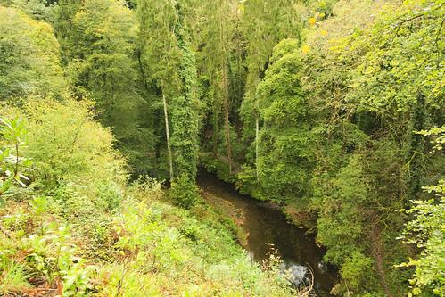 Lydford Gorge 018