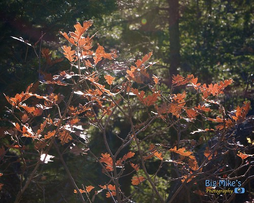Scrub Oak Highlights by Big Mike's Photography