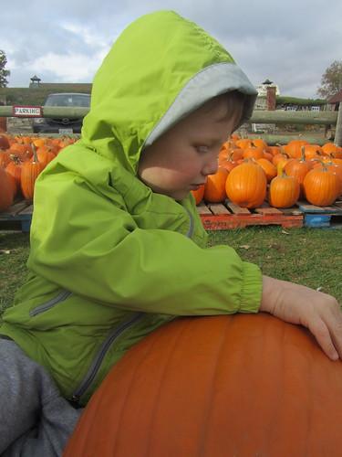 Choosing a pumpkin.