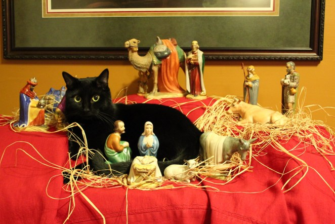 Our cat Porter has joined the nativity scene