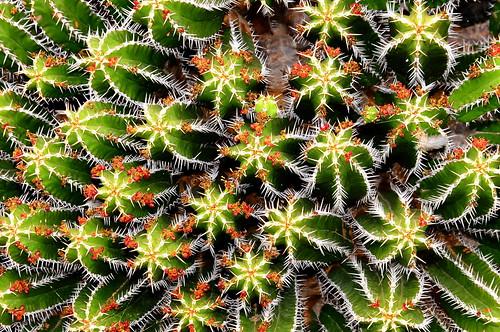 Chapter 9 - Lanzarote, Jardín de Cactus - (#1): The plant of wonders