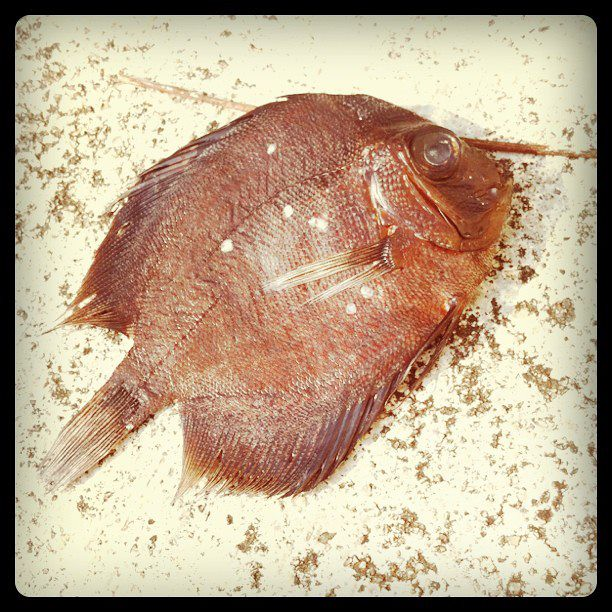 7 Mar - Fish out of water, spotted at my void deck with no water nearby
