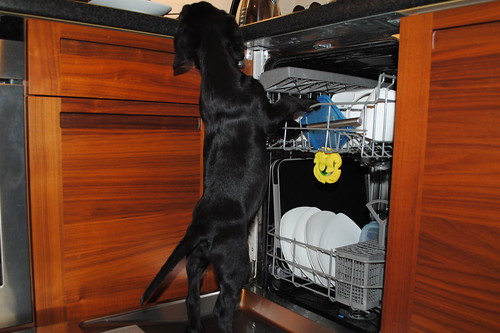 puppy licking dishes in dishwasher