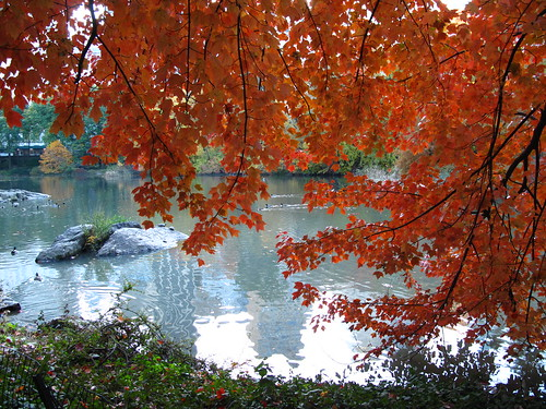 Autumn comes to Central Park