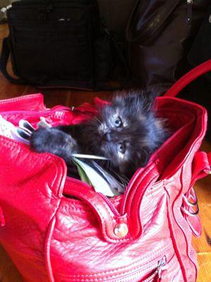 Cat's Purse