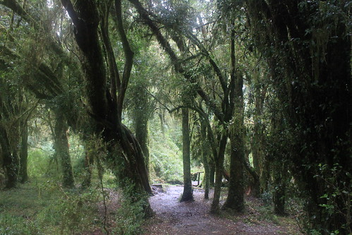 Parque Nacional Puyehue-192 by Hesperetusa