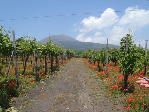 The Vineyard & Mount Vesuvius