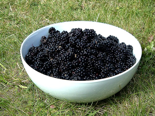 1 kilo of blackberries