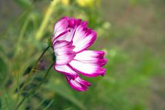 flower, Vácrátót