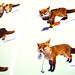 Mr Fox - A true British Native, 2009, Gavin J R