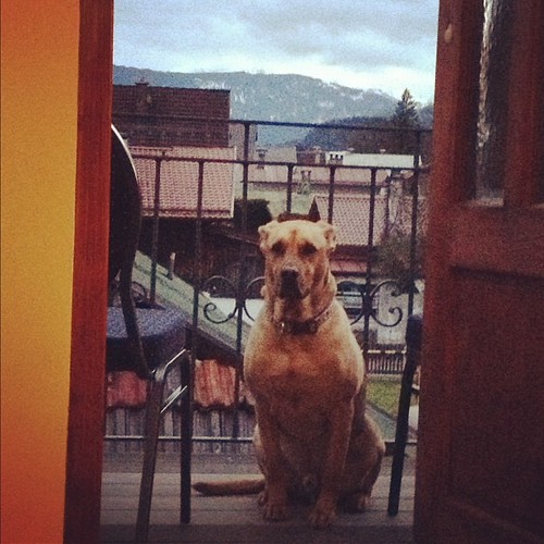 Balcony dog