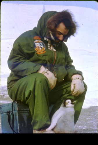 Participant sitting with a penguin on the Palmer Peninsula, Antarctica c.1962