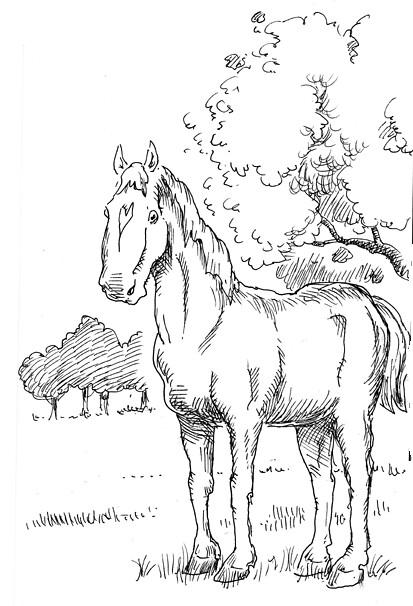 horsetreebookBL