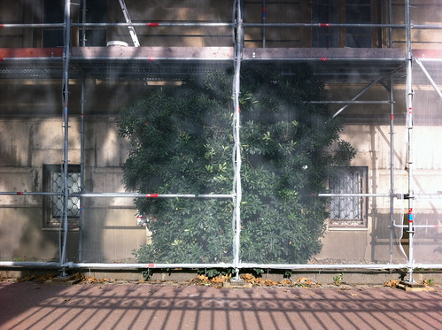 Tree behind screened scaffolding