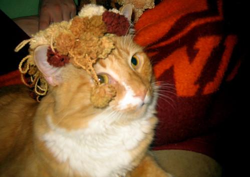 20111112 0001 - Oranjello and the scarf - IMG_3880