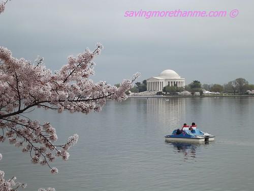 2012 National Cherry Blossom Festival
