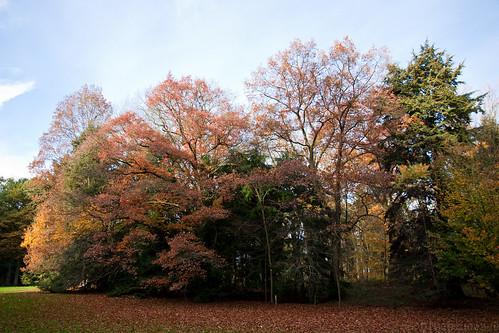 Autumn in the Arboreturm of Tervuren