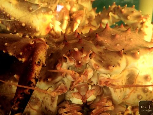 Jade Seafood 1001