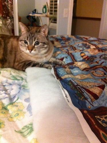 Cat helping sew 2