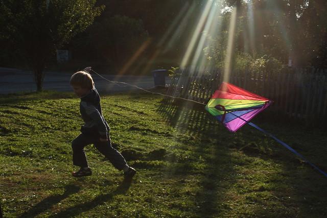 Sunlit kite runner
