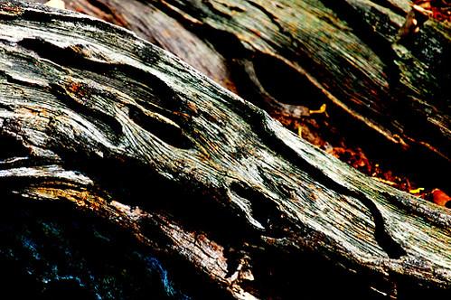 old wood sm