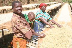 Drying Mzuzu coffee by Twin and Twin Trading Images, on Flickr