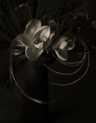 flowers_209