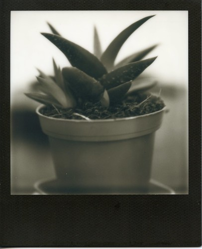 Aloe Vera by geyes30