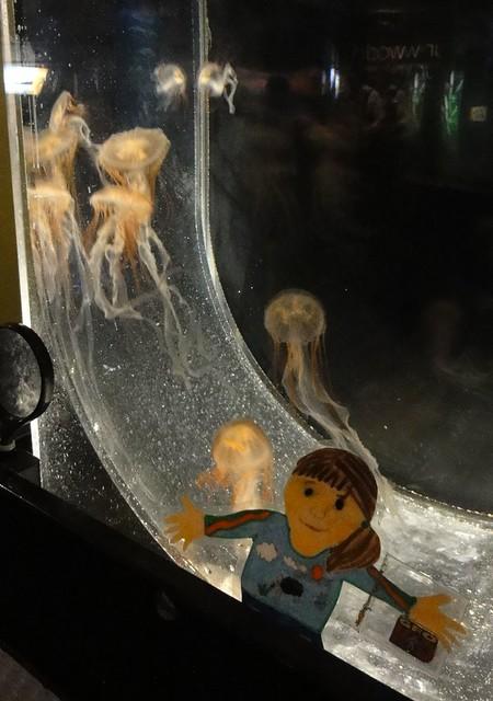japanese jellyfish