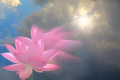 EXPLORED!  Lotus Pink Flower: Pink_flower: IMG_3453-sun-pl-dbl