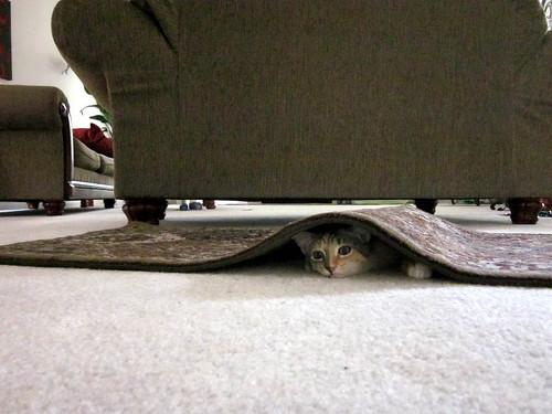 suri under the rug