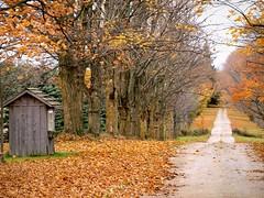 Fallen Leaves by MSVG