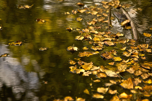 Beech and Oak meet in the pond by natamagat