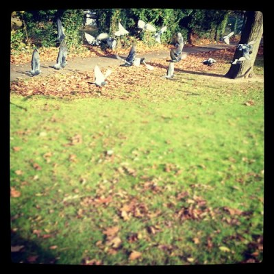 VERMIN WITH WINGS #london #wanstead #autumn #pigeons