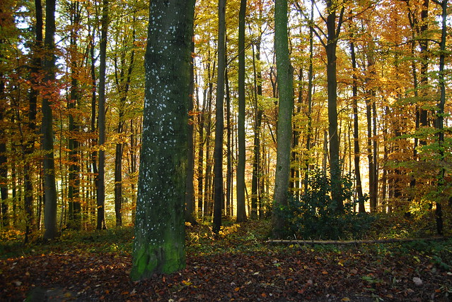 Herbstfarben 2011 VII