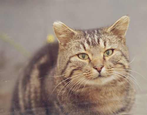 Found; Beautiful Friendly Cat