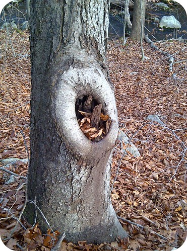 treehole with stuff in it