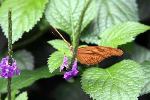 butterfly, niagara falls butterfly conservatory